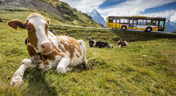 Grosse Scheidegg in Grindelwald