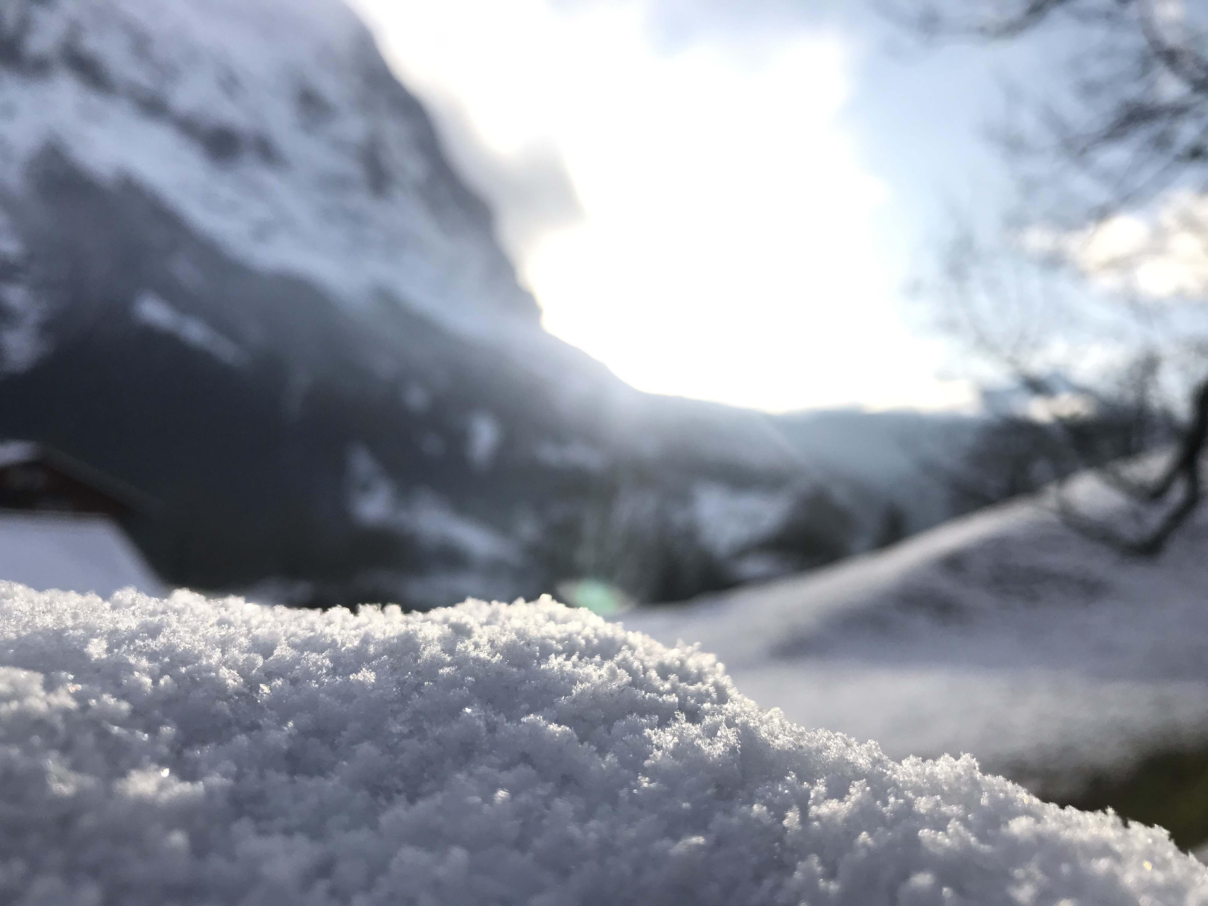 Ferienwohnung Chalet Anemone Grindelwald-Frühling in Grindelwald