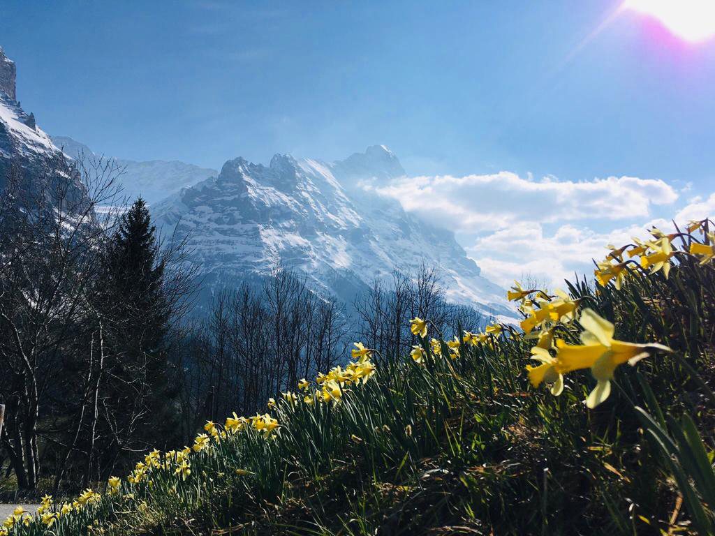 Ferienwohnung Chalet Anemone Grindelwald-Ostern in Grindelwald