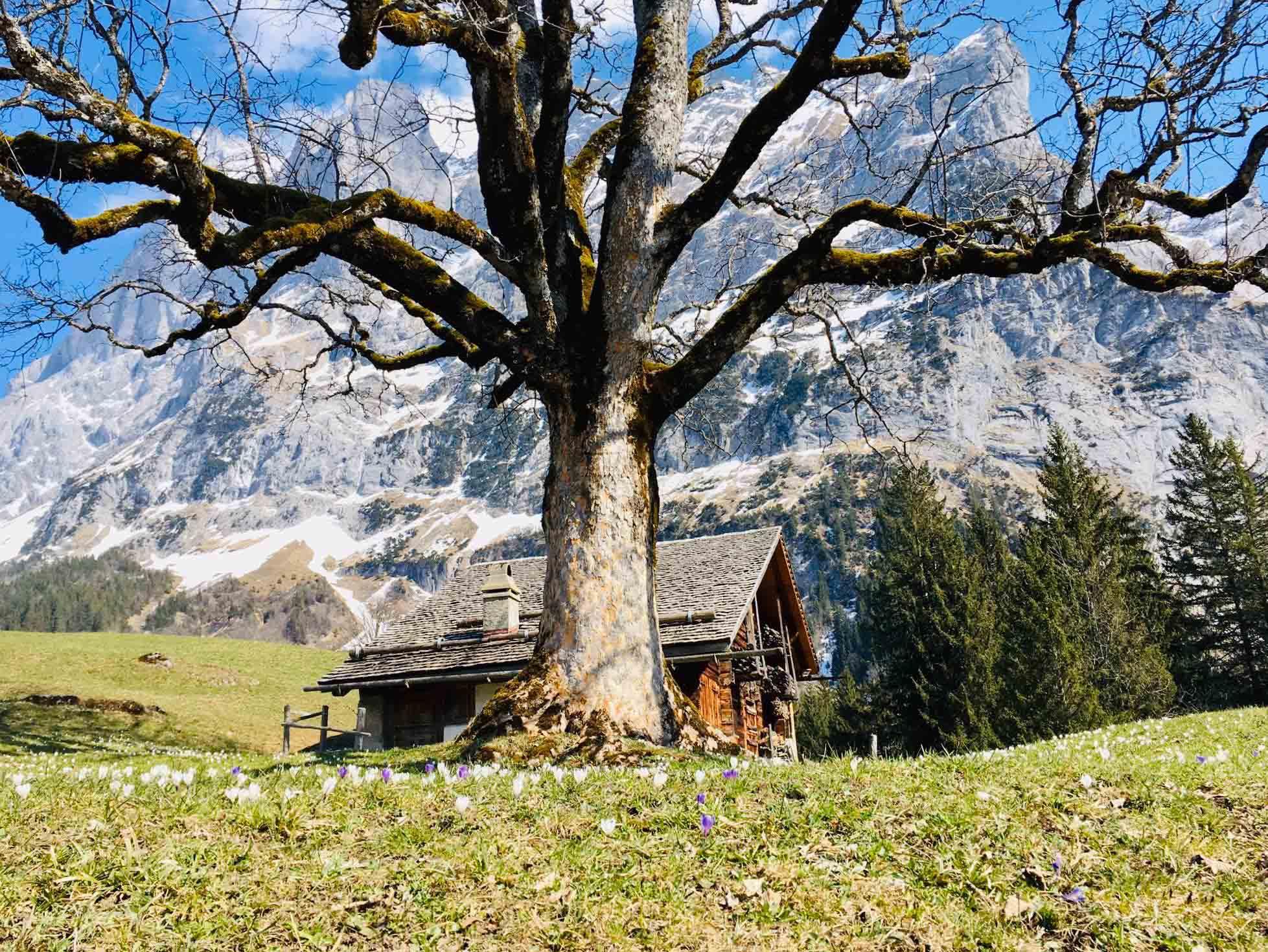 Ferienwohnung Chalet Anemone Grindelwald-Oberer Grindelwaldgletscher